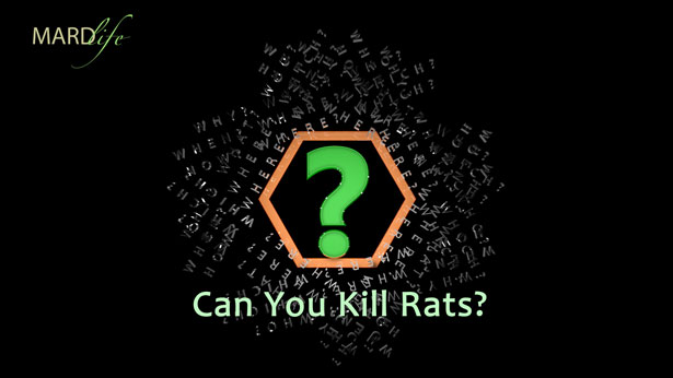 RHETORICS – CAN YOU KILL RATS?